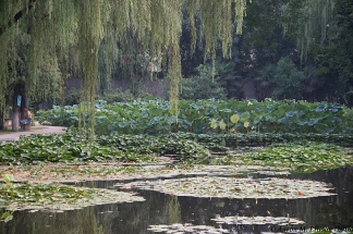 BotGarden water garden-20160824-AME-7269-small