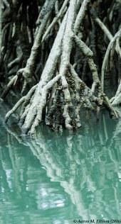 mangrove regflections II-20160724-AME-5895