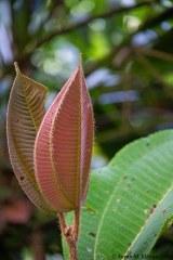 Leaf pair II