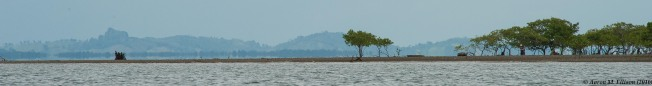 Golfo Dulce mangroves