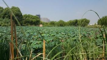Ba Qiao Wetland Park