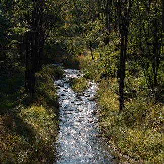 Qingyuan forest