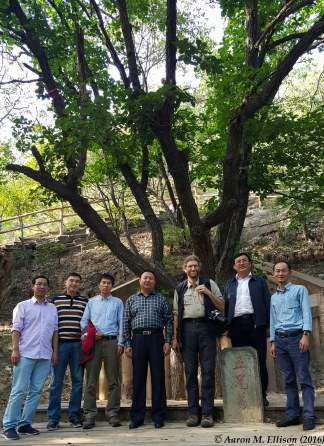 Scientific brothers at the Five Brothers Quercus mongolica tree