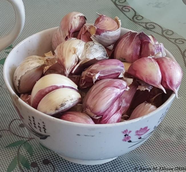 Garlic digestif