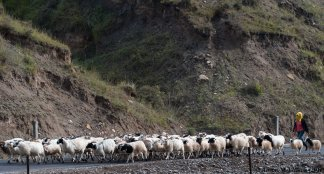 Herding sheep in the Qilian Mountains