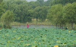 Bridge over lotus, Olympic Park, Beijing