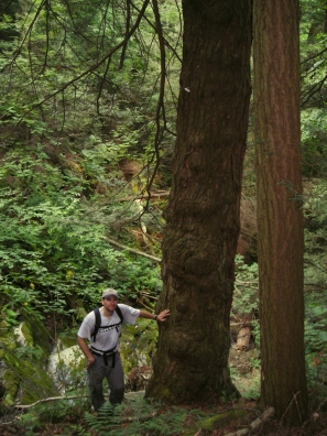 Hemlock 023. Tony D'Amato in a Berkshire Old-growth Forest (color)