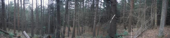 plot 1 panorama 20070821