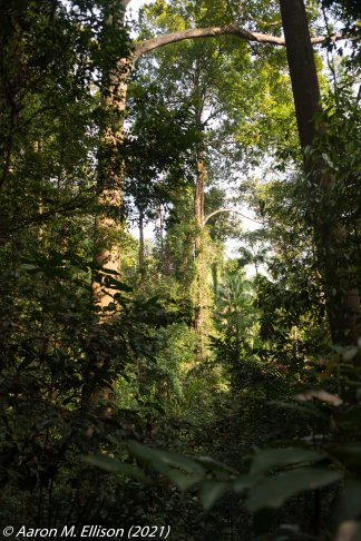 The primary forest plot at Bukit Timah