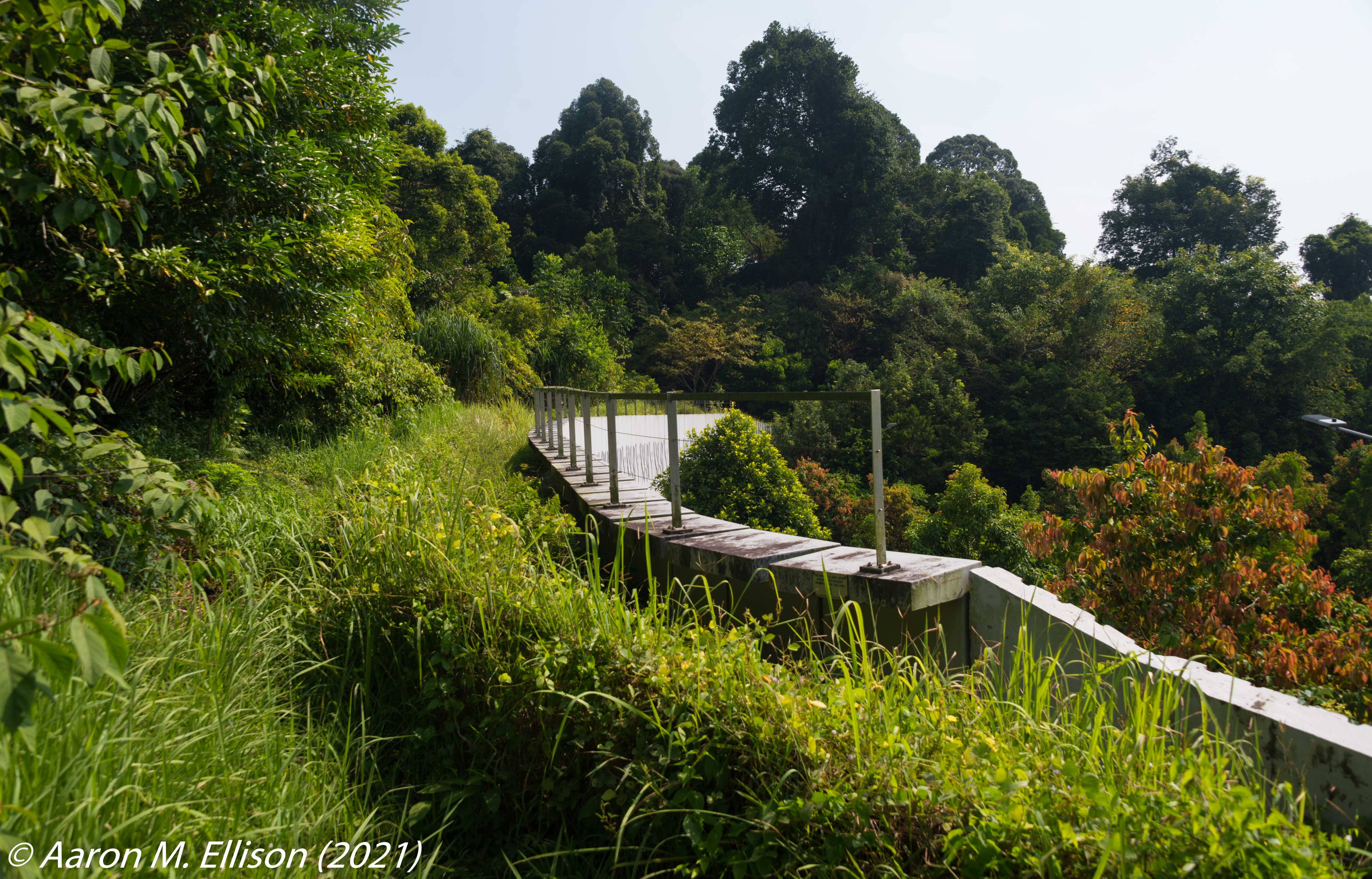 A photo of the Eco-Link over the Bukit Timah Expressway
